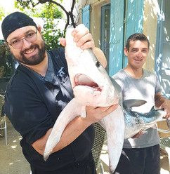 requin peau bleue gruissan.jpg