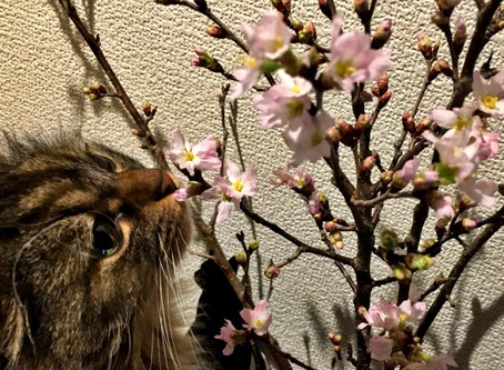 岩合光昭さんの猫マジック