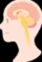 脳と脊髄が健康の鍵