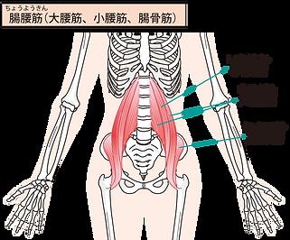 腰痛の原因.png