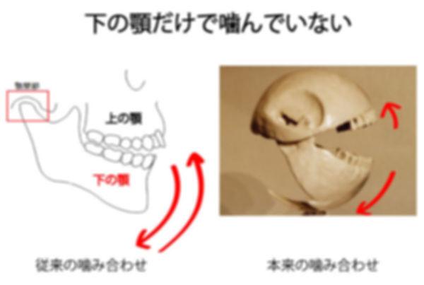 噛み合わせと頚椎の関連性