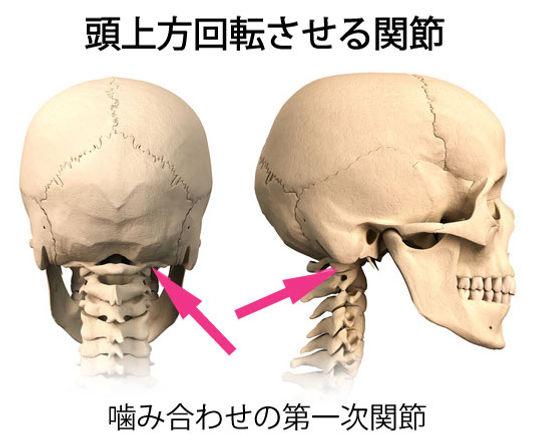 噛み合わせ運動の中心部分