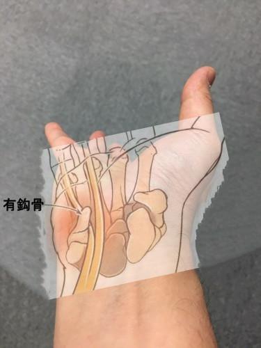 有鈎骨と神経
