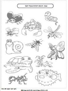 חרקים באביב 6.jpg