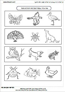 חרקים באביב 1.jpg