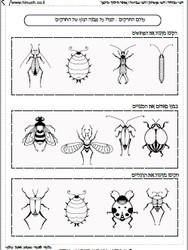 חרקים באביב 8 (במקום 7).jpg