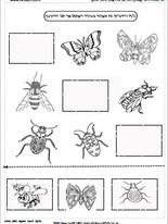 חרקים באביב 3.jpg