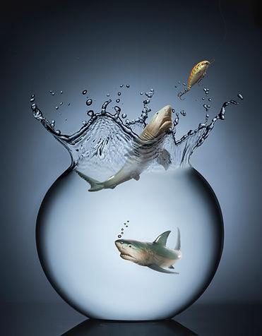 Shark B .jpg