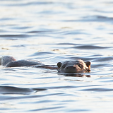 otter2311208.png