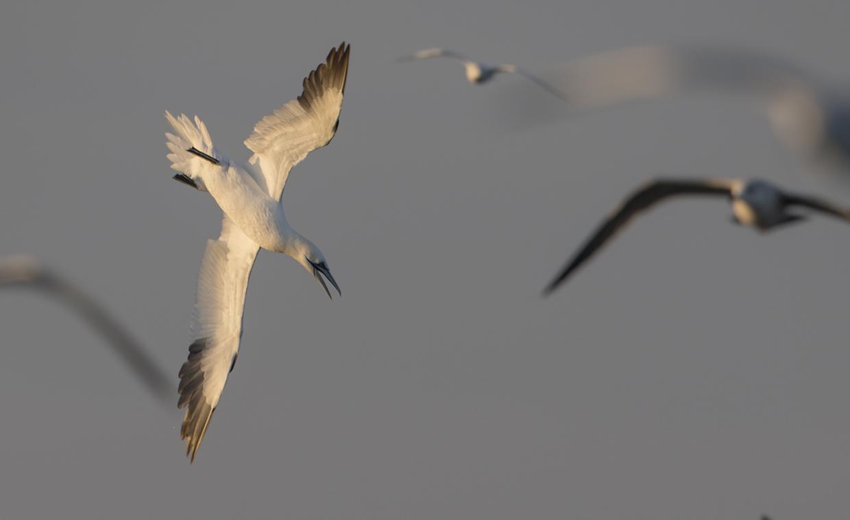 _MGL2065 Birding Holland