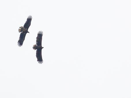 RONDJE OOSTVAARDERSPLASSEN MET WAARNEMING.NL: gezellige groep, veel vogels!