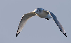 _MGL2011 Birding Holland