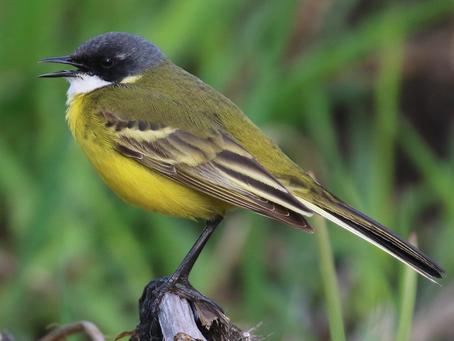 Vogelparadijs Zuidlaardermeer
