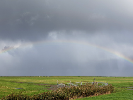 VERRASSINGSEXCURSIE IN NOORD-NEDERLAND: kleurrijk en vele tinten grijs tegelijk!