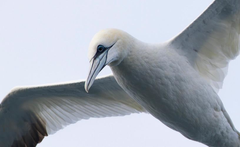 _MGL1951 Birding Holland.jpg
