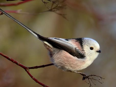 Wintervogels langs de randmeren: lekker uitwaaien en lekker veel vogels!
