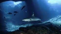 shark-diving2.jpg