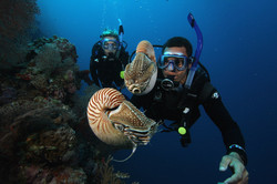 Drop off diving