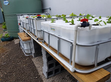 Curepipe Aquaponics by Fish and Plants