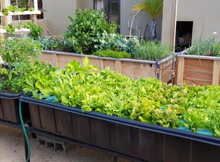 Aquaponics raft beds at Fish and plants ltd