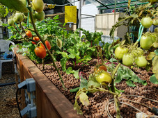 A system we installed in Beau Bassin, with beautiful vegetables.
