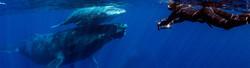 filming humpbacks.jpg