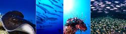 Underwater Mauritius.jpg