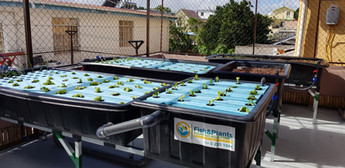 installation of Aquaponics system in Vacoas