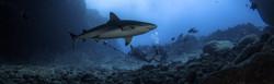 Shark photo with 360