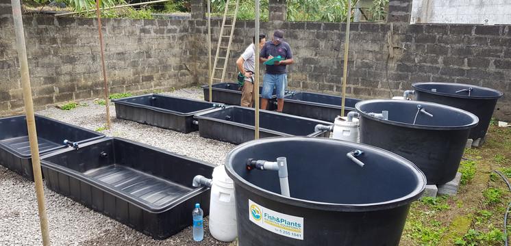 Aquaponics system installed at UOM