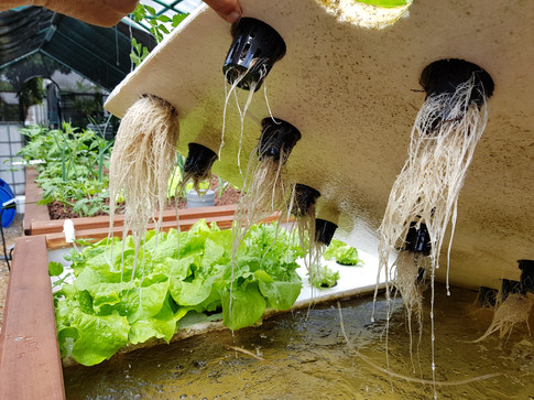 Aquaponics Raft system