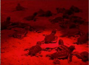 Playa Grande Shuttle & Tours turtle tour
