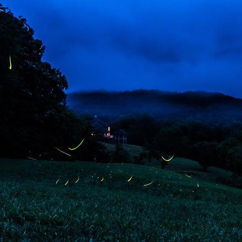 Fireflies in WNC
