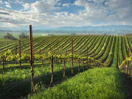 Фестиваль USA Wine Fest 2021 стартовал!