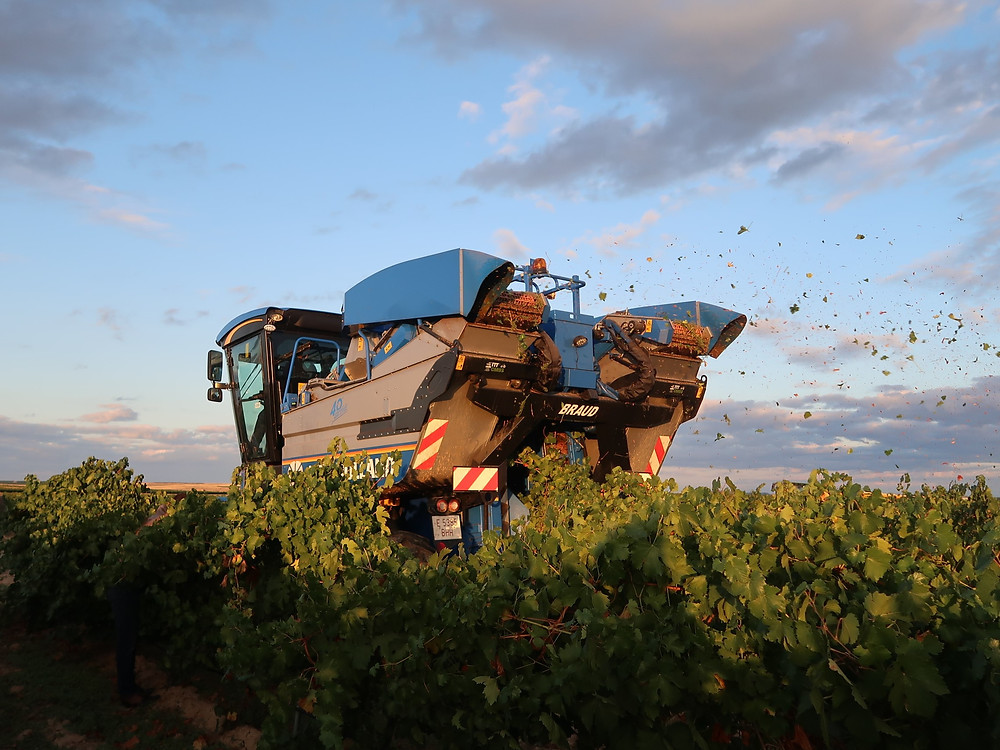 Машинная уборка винограда Руэды