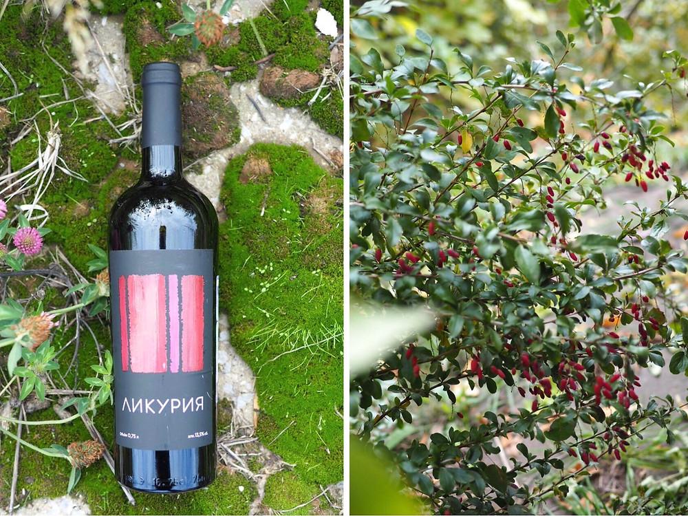 Обзор на вино Ликурия