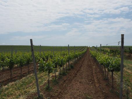 Alma Valley - Современная винодельня в Крыму. Часть 1 - Винодельня.