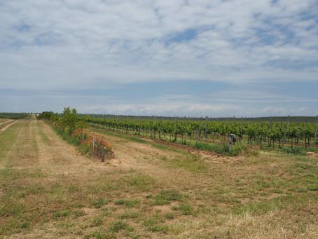 Alma Valley - Современная винодельня в Крыму. Часть 2 - Покупка новых земель, новости, санкции.