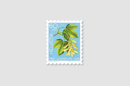 Flower Maple | 60 RP | Stock: 82 Piece