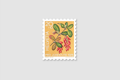 Flower Berberis | 20 RP | Stock: 23 Piece