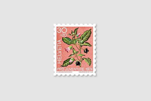 Flower Belladonna | 30 RP | Stock:  64 Piece