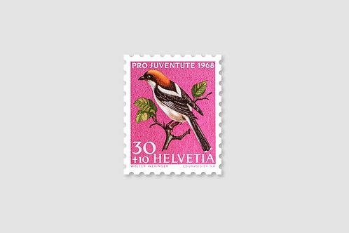 Bird Woodchat-Shrike | 30 RP | Stock: 91 Piece