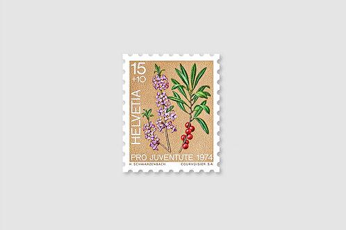 Flower Daphne | 15 RP | Stock: 19 Piece