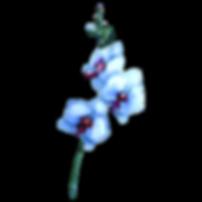 White%252520Flowers_edited_edited_edited