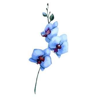 White%2520Flowers_edited_edited.png