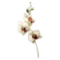 White%20Flowers_edited.png