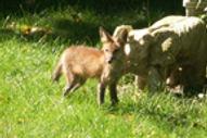 Fox.6.jpg