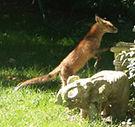 Fox.1.jpg