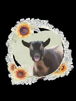 goat sunflower
