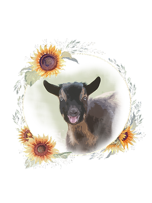 goat sunflower